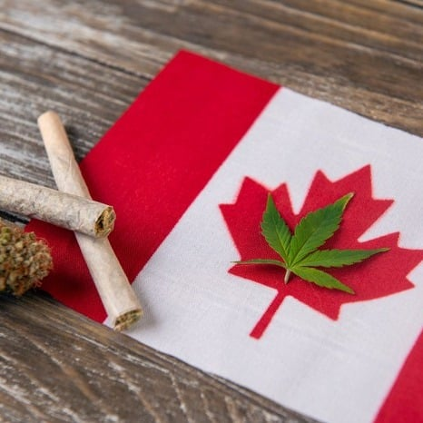 kind deals canadian flag - #2 Sweet & Sour Deal Of The Day ( Sativa ) Super Sale!!!! Weed Delivery Toronto - Cannabis Delivery Toronto - Marijuana Delivery Toronto - Weed Edibles Delivery Toronto - Kush Delivery Toronto - Same Day Weed Delivery in Toronto - 24/7 Weed Delivery Toronto - Hash Delivery Toronto - We are Kind Flowers - Premium Cannabis Delivery in Toronto with over 200 menu items. We're an experienced weed delivery in Toronto and we deliver all orders in a smell-proof, discreet package straight to your door. Proudly Canadian and happy to always serve you. We offer same day weed delivery toronto, cannabis delivery toronto, kush delivery toronto, edibles weed delivery toronto, hash delivery toronto, 24/7 weed delivery toronto, weed online delivery toronto