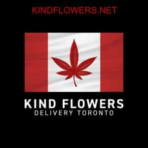 Kind Flowers Logo kindflowers.net - Kind Flowers - Weed Delivery Toronto - Cannabis Delivery Toronto - Marijuana Delivery Toronto - Weed Edibles Delivery Toronto - Kush Delivery Toronto - Same Day Weed Delivery in Toronto - 24/7 Weed Delivery Toronto - Hash Delivery Toronto Weed Delivery Toronto - Cannabis Delivery Toronto - Marijuana Delivery Toronto - Weed Edibles Delivery Toronto - Kush Delivery Toronto - Same Day Weed Delivery in Toronto - 24/7 Weed Delivery Toronto - Hash Delivery Toronto - We are Kind Flowers - Premium Cannabis Delivery in Toronto with over 200 menu items. We're an experienced weed delivery in Toronto and we deliver all orders in a smell-proof, discreet package straight to your door. Proudly Canadian and happy to always serve you. We offer same day weed delivery toronto, cannabis delivery toronto, kush delivery toronto, edibles weed delivery toronto, hash delivery toronto, 24/7 weed delivery toronto, weed online delivery toronto