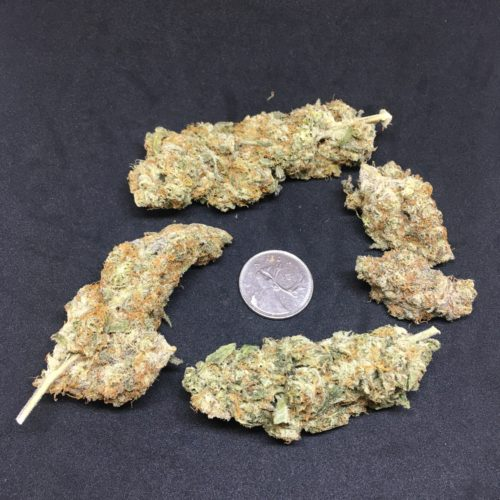 black dolato 1 scaled - Black Dolato B.C Craft Cannabis Indica Leaning Hybrid (AAAA+) Weed Delivery Toronto - Cannabis Delivery Toronto - Marijuana Delivery Toronto - Weed Edibles Delivery Toronto - Kush Delivery Toronto - Same Day Weed Delivery in Toronto - 24/7 Weed Delivery Toronto - Hash Delivery Toronto - We are Kind Flowers - Premium Cannabis Delivery in Toronto with over 200 menu items. We're an experienced weed delivery in Toronto and we deliver all orders in a smell-proof, discreet package straight to your door. Proudly Canadian and happy to always serve you. We offer same day weed delivery toronto, cannabis delivery toronto, kush delivery toronto, edibles weed delivery toronto, hash delivery toronto, 24/7 weed delivery toronto, weed online delivery toronto