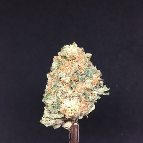 tropic thunder 2 scaled - Tropic Thunder (AAA+) Indica Leaning Hybrid *** NEW FIRE Weed Delivery Toronto - Cannabis Delivery Toronto - Marijuana Delivery Toronto - Weed Edibles Delivery Toronto - Kush Delivery Toronto - Same Day Weed Delivery in Toronto - 24/7 Weed Delivery Toronto - Hash Delivery Toronto - We are Kind Flowers - Premium Cannabis Delivery in Toronto with over 200 menu items. We're an experienced weed delivery in Toronto and we deliver all orders in a smell-proof, discreet package straight to your door. Proudly Canadian and happy to always serve you. We offer same day weed delivery toronto, cannabis delivery toronto, kush delivery toronto, edibles weed delivery toronto, hash delivery toronto, 24/7 weed delivery toronto, weed online delivery toronto