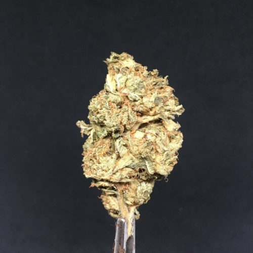 grape kush 1 scaled - Grape Kush AA+ Indica Leaning Hybrid *** SUPER SALE 90$/OZ b4 Coupons Weed Delivery Toronto - Cannabis Delivery Toronto - Marijuana Delivery Toronto - Weed Edibles Delivery Toronto - Kush Delivery Toronto - Same Day Weed Delivery in Toronto - 24/7 Weed Delivery Toronto - Hash Delivery Toronto - We are Kind Flowers - Premium Cannabis Delivery in Toronto with over 200 menu items. We're an experienced weed delivery in Toronto and we deliver all orders in a smell-proof, discreet package straight to your door. Proudly Canadian and happy to always serve you. We offer same day weed delivery toronto, cannabis delivery toronto, kush delivery toronto, edibles weed delivery toronto, hash delivery toronto, 24/7 weed delivery toronto, weed online delivery toronto