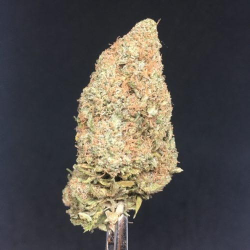 columbian gold 1 scaled - Colombian Gold B.C Craft Cannabis (AAAA) Sativa Landrace *** Super Rare Weed Delivery Toronto - Cannabis Delivery Toronto - Marijuana Delivery Toronto - Weed Edibles Delivery Toronto - Kush Delivery Toronto - Same Day Weed Delivery in Toronto - 24/7 Weed Delivery Toronto - Hash Delivery Toronto - We are Kind Flowers - Premium Cannabis Delivery in Toronto with over 200 menu items. We're an experienced weed delivery in Toronto and we deliver all orders in a smell-proof, discreet package straight to your door. Proudly Canadian and happy to always serve you. We offer same day weed delivery toronto, cannabis delivery toronto, kush delivery toronto, edibles weed delivery toronto, hash delivery toronto, 24/7 weed delivery toronto, weed online delivery toronto