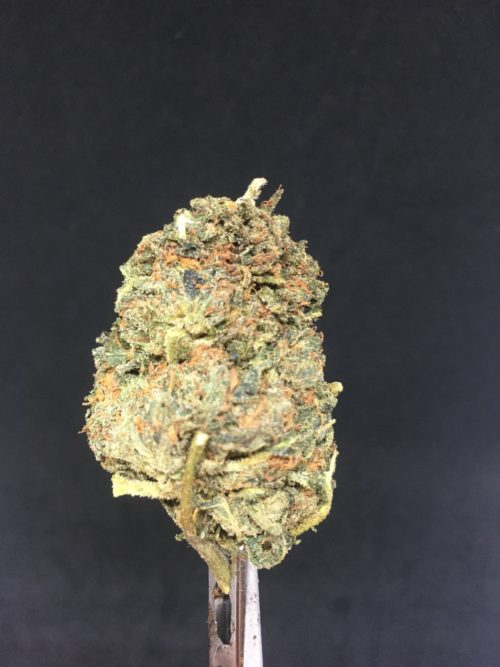 ogkush 1 scaled - OG Kush Select AA+ Indica Leaning Hybrid Weed Delivery Toronto - Cannabis Delivery Toronto - Marijuana Delivery Toronto - Weed Edibles Delivery Toronto - Kush Delivery Toronto - Same Day Weed Delivery in Toronto - 24/7 Weed Delivery Toronto - Hash Delivery Toronto - We are Kind Flowers - Premium Cannabis Delivery in Toronto with over 200 menu items. We're an experienced weed delivery in Toronto and we deliver all orders in a smell-proof, discreet package straight to your door. Proudly Canadian and happy to always serve you. We offer same day weed delivery toronto, cannabis delivery toronto, kush delivery toronto, edibles weed delivery toronto, hash delivery toronto, 24/7 weed delivery toronto, weed online delivery toronto