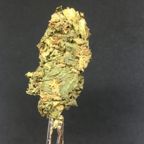 purple punch 1 scaled - Purple Punch Select AA Indica Leaning Hybrid Weed Delivery Toronto - Cannabis Delivery Toronto - Marijuana Delivery Toronto - Weed Edibles Delivery Toronto - Kush Delivery Toronto - Same Day Weed Delivery in Toronto - 24/7 Weed Delivery Toronto - Hash Delivery Toronto - We are Kind Flowers - Premium Cannabis Delivery in Toronto with over 200 menu items. We're an experienced weed delivery in Toronto and we deliver all orders in a smell-proof, discreet package straight to your door. Proudly Canadian and happy to always serve you. We offer same day weed delivery toronto, cannabis delivery toronto, kush delivery toronto, edibles weed delivery toronto, hash delivery toronto, 24/7 weed delivery toronto, weed online delivery toronto