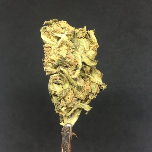 purple punch 2 scaled - Purple Punch Select AA Indica Leaning Hybrid Weed Delivery Toronto - Cannabis Delivery Toronto - Marijuana Delivery Toronto - Weed Edibles Delivery Toronto - Kush Delivery Toronto - Same Day Weed Delivery in Toronto - 24/7 Weed Delivery Toronto - Hash Delivery Toronto - We are Kind Flowers - Premium Cannabis Delivery in Toronto with over 200 menu items. We're an experienced weed delivery in Toronto and we deliver all orders in a smell-proof, discreet package straight to your door. Proudly Canadian and happy to always serve you. We offer same day weed delivery toronto, cannabis delivery toronto, kush delivery toronto, edibles weed delivery toronto, hash delivery toronto, 24/7 weed delivery toronto, weed online delivery toronto