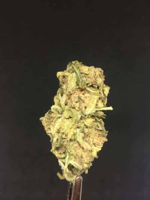 purple punch 3 scaled - Purple Punch Select AA Indica Leaning Hybrid Weed Delivery Toronto - Cannabis Delivery Toronto - Marijuana Delivery Toronto - Weed Edibles Delivery Toronto - Kush Delivery Toronto - Same Day Weed Delivery in Toronto - 24/7 Weed Delivery Toronto - Hash Delivery Toronto - We are Kind Flowers - Premium Cannabis Delivery in Toronto with over 200 menu items. We're an experienced weed delivery in Toronto and we deliver all orders in a smell-proof, discreet package straight to your door. Proudly Canadian and happy to always serve you. We offer same day weed delivery toronto, cannabis delivery toronto, kush delivery toronto, edibles weed delivery toronto, hash delivery toronto, 24/7 weed delivery toronto, weed online delivery toronto
